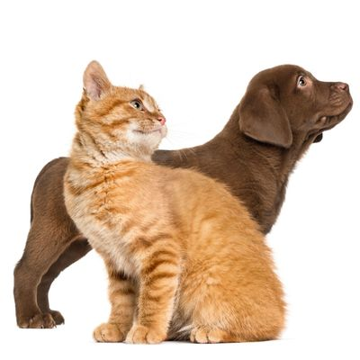 Dog and Cat looking right